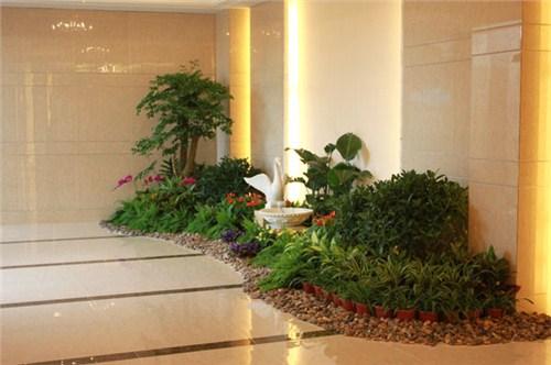 杭州小型植物租赁上门服务「慧枫供应」