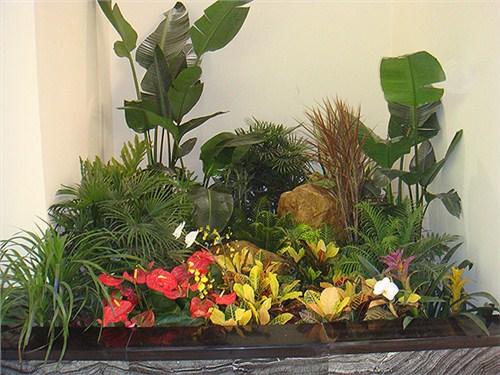 温州小型植物租赁市场「慧枫供应」