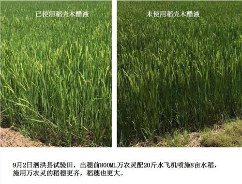 蔬菜微肥木醋液厂家直供 诚信经营「江西金糠新材料生产基地供应」