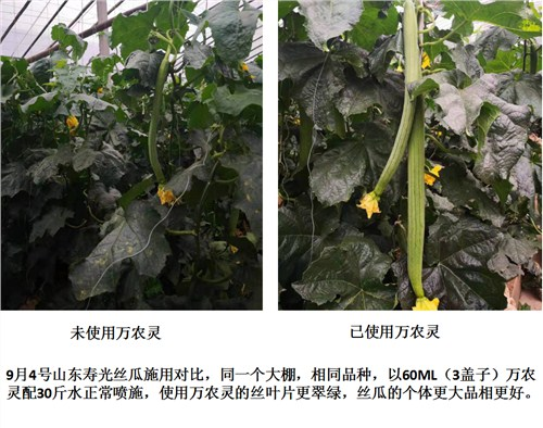 廣西南寧農用木醋液生廠基地 江西金糠新材料供應