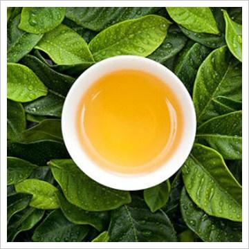 冰岛普洱茶哪家便宜,冰岛