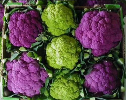 正規紫花菜貨真價實 客戶至上 昆明亞約燊農業科技開發供應