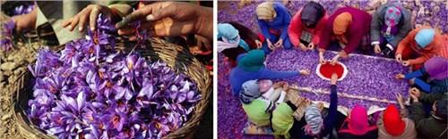 河源进口藏红花伊朗藏红花产品实拍 袁州区城东立林商贸供应