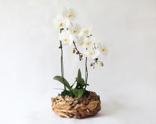 上海茸薇园艺有限公司