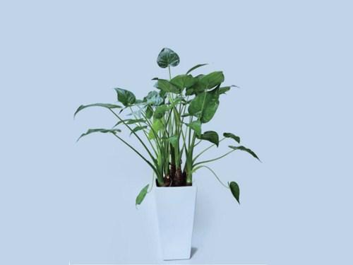 湖北中型绿植信息推荐 铸造辉煌「梦泽园艺供应」