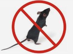 平顶山酒店灭鼠价格,灭鼠