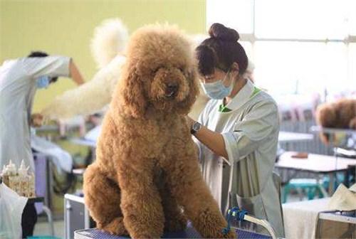 香港猎宠网宠物美容师店转让 卓越服务 上海乾枫人力资源hg0088正网投注|首页