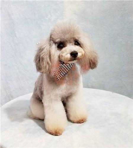 天津专业宠物行业网招聘网 服务至上 上海乾枫人力资源供应