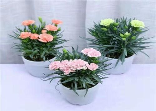 贵阳鲜花速递 免费送花上门,鲜花