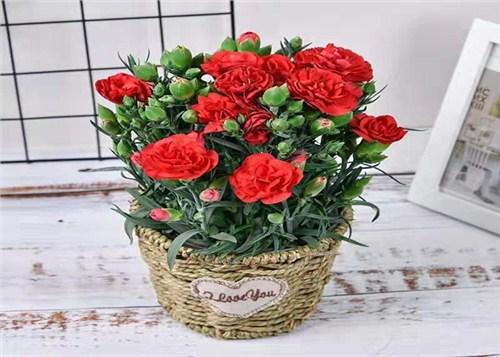 天津鲜花促销价格,鲜花