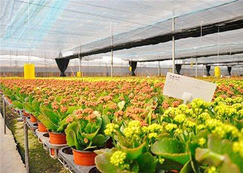 鲜花花材批发市场,鲜花