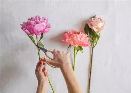 四川花材批发市场,花材