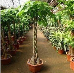 湖北绿色盆栽批发价格,绿色盆栽