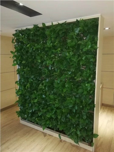 丰泽办公室绿植养护,办公室绿植