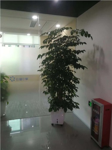 南安辦公室綠植價格,辦公室綠植