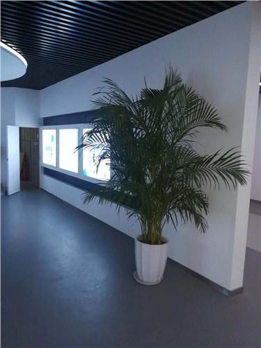 豐澤辦公室綠植租賃價格,辦公室綠植