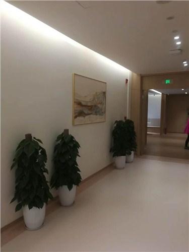 辦公室綠植擺放設計,辦公室綠植
