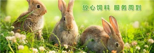济宁专用兔饲料价格,兔饲料