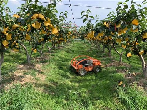 云南自動除草機銷售廠家 歡迎咨詢「上海漢興機電供應」