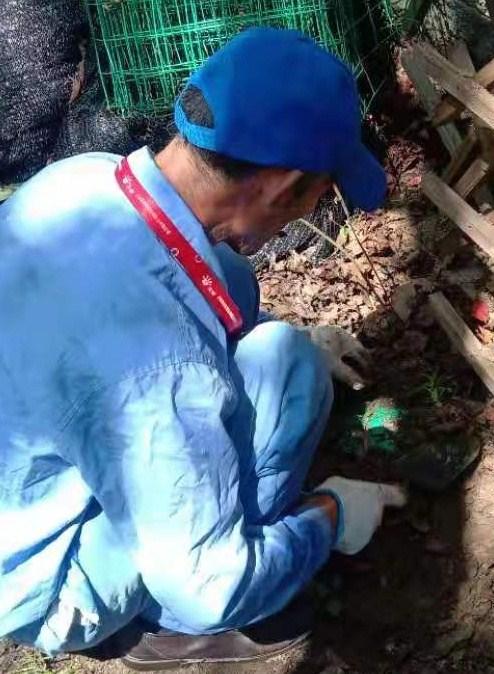 优质专业灭白蚁价格,专业灭白蚁