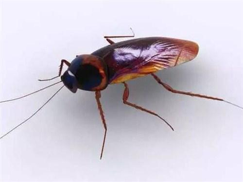黄浦区专业专业灭蟑螂服务至上,专业灭蟑螂
