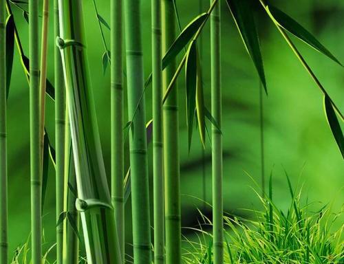 刚竹厂家直供,刚竹