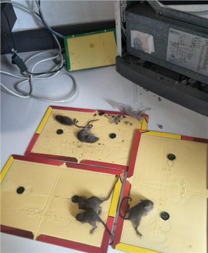深圳职业杀虫灭鼠来电咨询,杀虫灭鼠