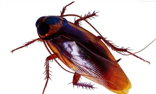 相城区蟑螂防治全国发货,蟑螂防治