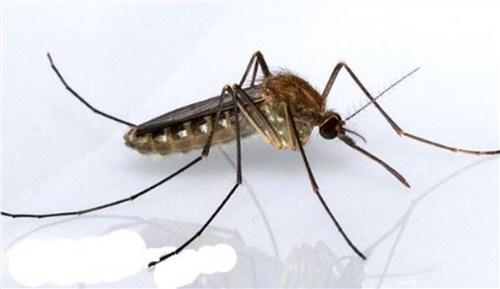蚊子防治诚信企业推荐,蚊子防治