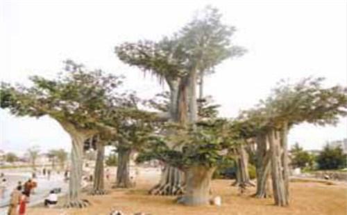 苏州假树的制作过程_苏州假树的树叶怎么绕_苏州简易假树制作方法_ 御林棠供