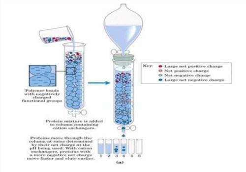 北京直销蛋白纯化系统 苏州英赛斯智能科技供应