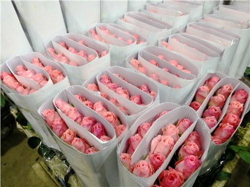 云南出口鲜花厂家出口 欢迎咨询「云南昆明安学鲜花批发供应」