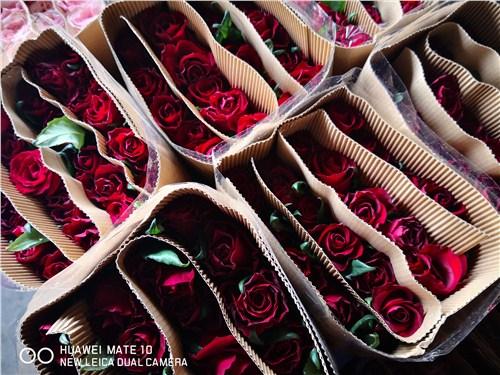 云南斗南优质玫瑰花批发,玫瑰