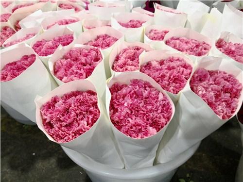 云南优质康乃馨鲜花批发的店铺 信息推荐 云南安学鲜花供应