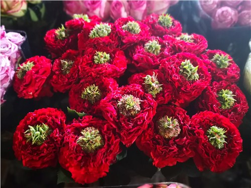 斗南鲜花市场批发 云南安学鲜花供应