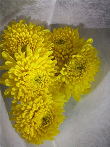 云南批发蝴蝶兰需要多少钱 云南安学鲜花供应