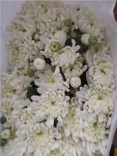 云南出口菊花厂家批发 信息推荐 云南安学鲜花供应