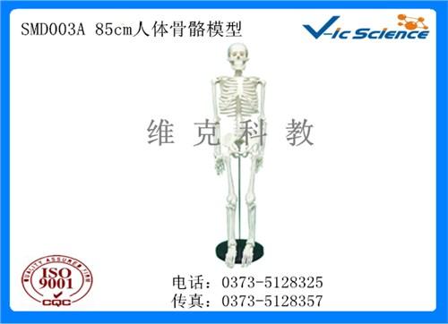 骨架标本_骨架标本定制_医用用骨架标本定制 _维克科教供