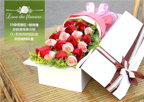 洛阳玫瑰送花,玫瑰