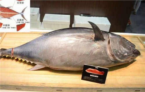 宝山区优质蓝鳍金枪鱼新报价 真诚推荐「上海鑫瑞食品供应」