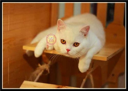 昆明布偶猫舍联系方式「昆宠生活馆」