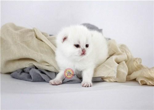 世博片区布偶猫舍在哪里,猫舍