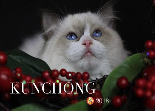 五华区高颜值布偶猫图片「昆宠生活馆」