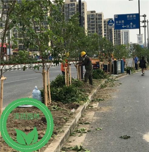 供应-上海-绿化工程-承接-泽珐供