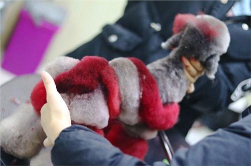 硚口区学宠物美容课程 和谐共赢「武汉彼丕振兴宠物咨询供应」