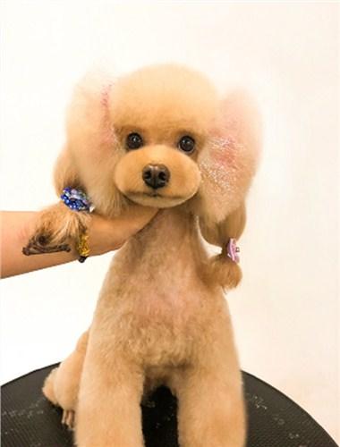 武汉正规的宠物美容课程 诚信经营「武汉彼丕振兴宠物咨询供应」