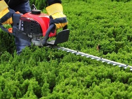 六合区专业园林养护服务,园林养护