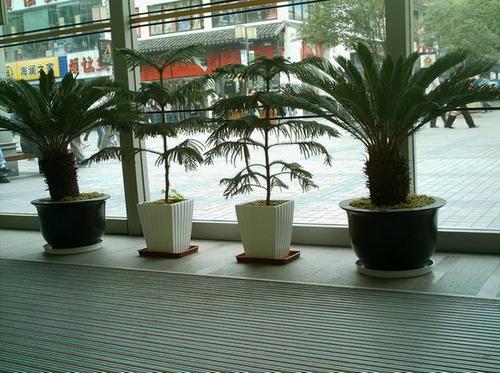 崇州办公司植物摆租公司哪家好,植物