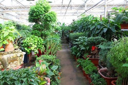 南充植物租摆哪家好,植物