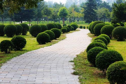 广汉小区绿化工程施工公司 服务至上「成都十步景环境艺术供应」